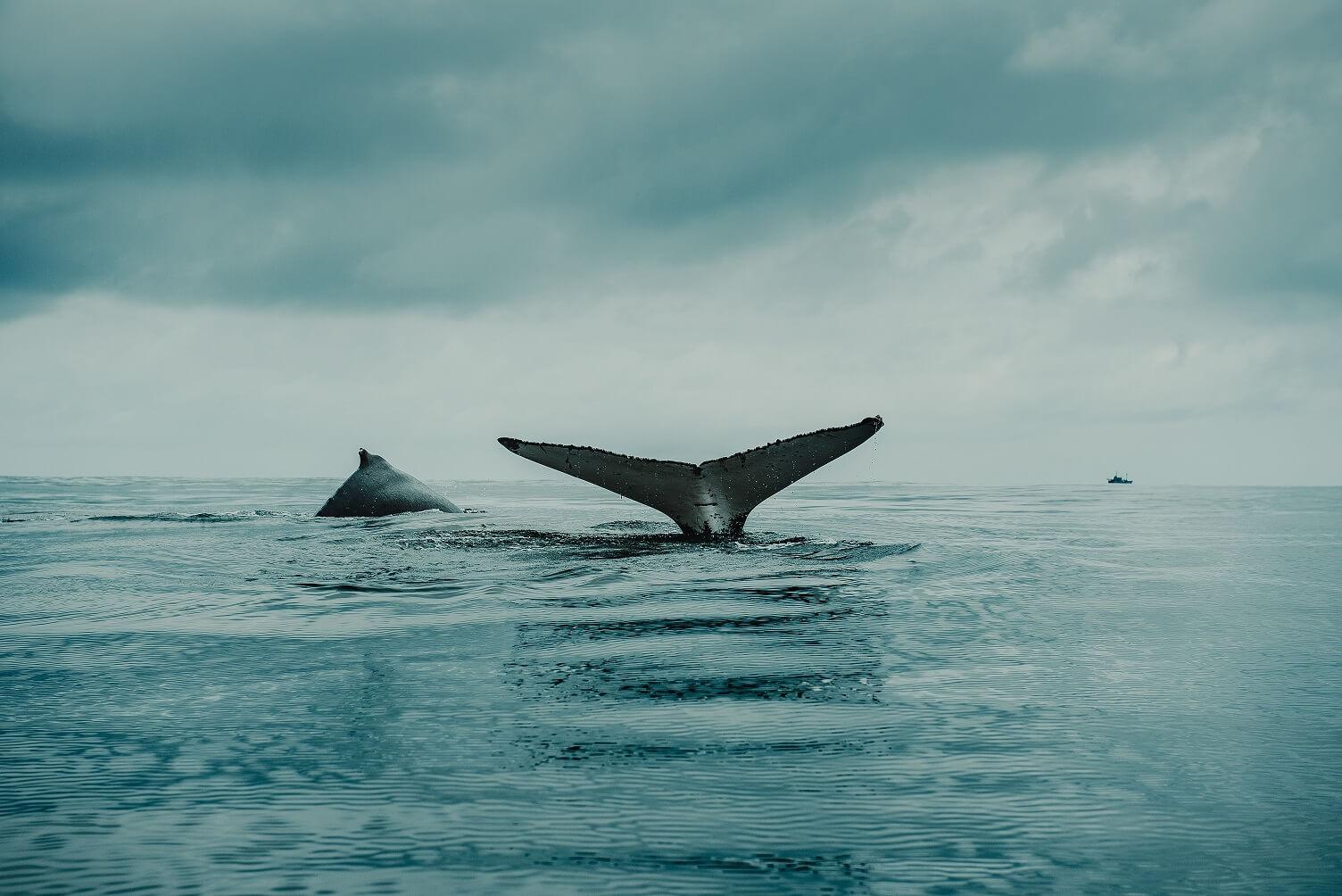 Vyhlídka na pozorování velryb
