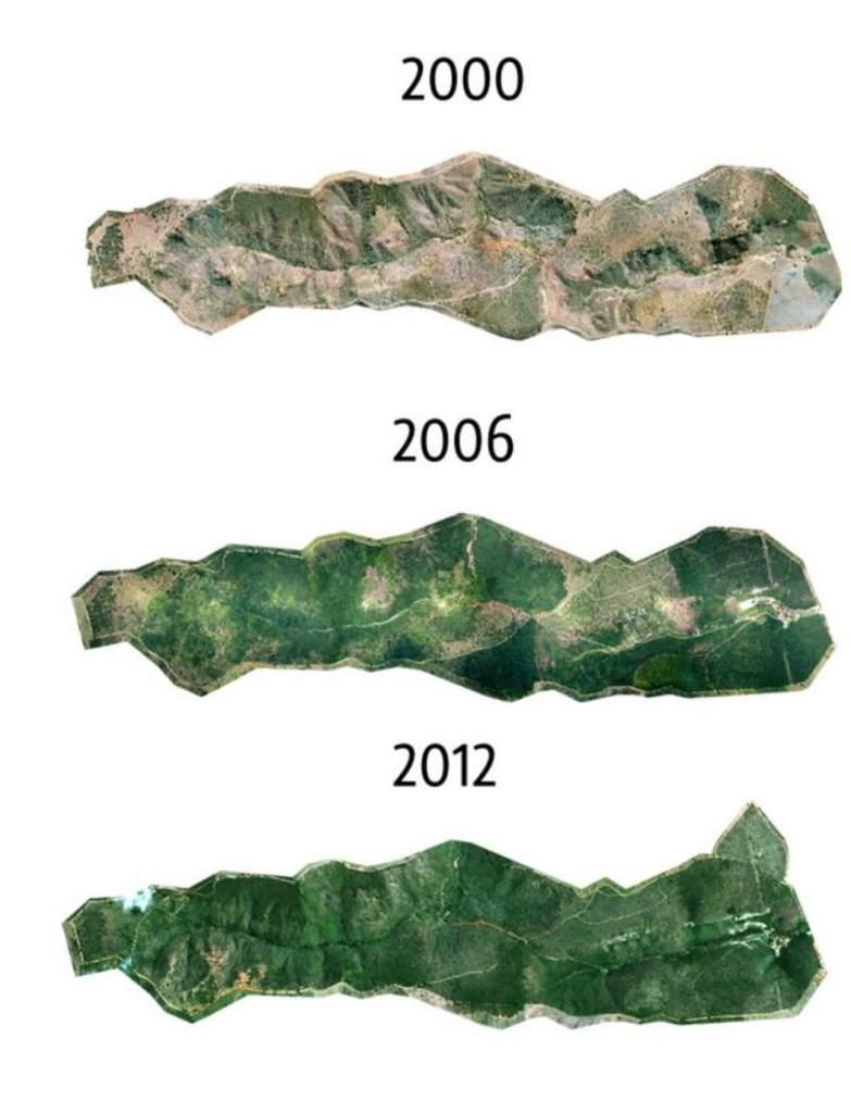 postupná obnova lesa v brazílii