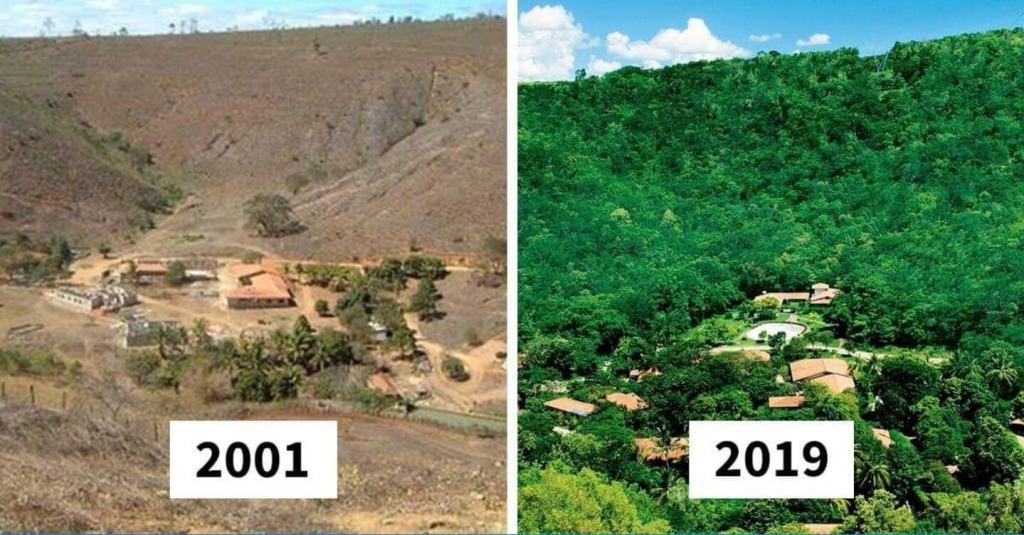 obnova lesa před a po