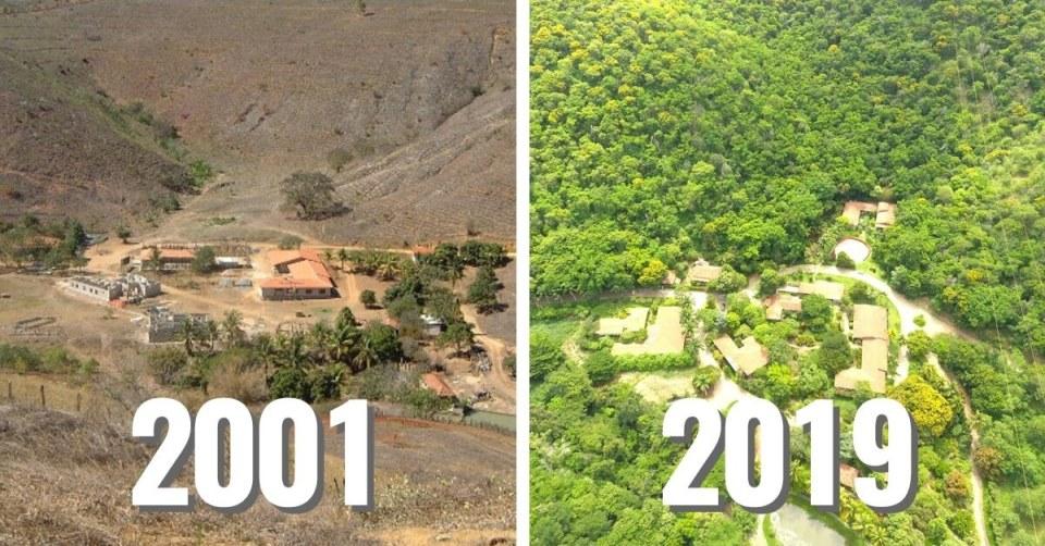 obnova brazilského pralesa